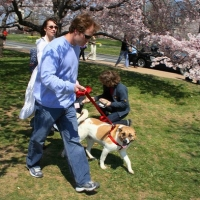 10 Rules For A Successful Walk With Your Dog In Atlanta