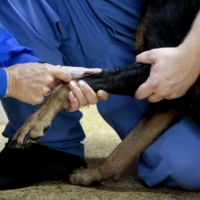 5 Reasons Your Dog is Limping – Expert Vet's Perspective