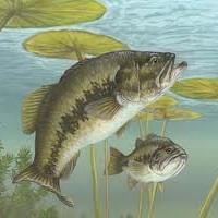 5 Tips For Catching Bass