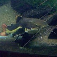 5 Tips To Catch More Catfish