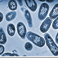 Salmonella Continues to Be A Threat, E Coli Declining In the United States