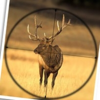 Affordable Elk Hunts Are Still Possible