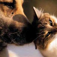 After the Death Of A Pet: How Soon is Too Soon to Get A New Companion?