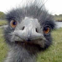Animal Behaviour – Working With Ostriches