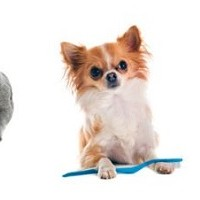 Animal Dental Health, Dental Care for Pets, Dental Disease In Pets