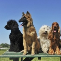 Animal Hospital In Mississauga  -  Care, Love And Comfort for Your Sick Pet