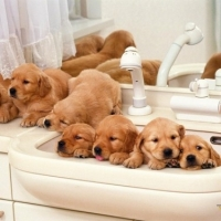 Animal Hospital Mississauga Suggest 5 Crucial Points For New Puppy Owners