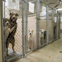 Animal Rescue And Shelters