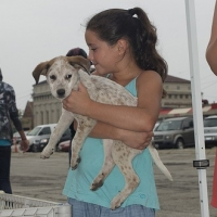 Are You Prepared For The Fees Related To Dog Adoption In Atlanta