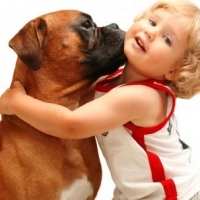Are You Ready for A Boxer Dog