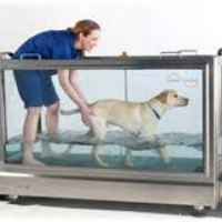 Arthritis And Dog Pain Relief