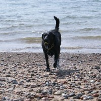 Arthritis And Exercise Dogs