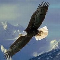 Bald Eagles, Our National Bird And Emblem