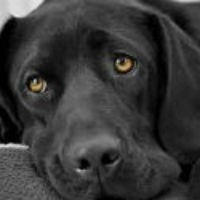 Best Dog Food For Overweight Dogs