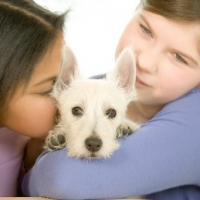 Best Dry Puppy Food Tips