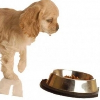 Best Food for Puppies: Basic Ideas to Get You Started