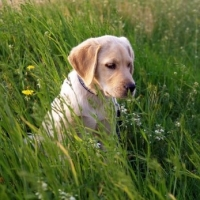 Best Food For Puppies - What Should And Should Not Be In It!
