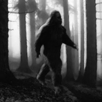 Best Plasma Hdtv  -  Bigfoot Captured Alive