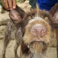 Born Beautiful, Considered Ugly – Dogs