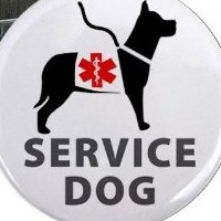 Boxer As A Service Or Therapy Dog