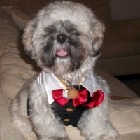 Breaking News – Atlanta Dog Scene Interview With A True Shih Tzu Dog Lover