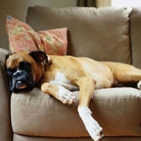 Bringing A New Dog Home: What to Do, And What NOT to Do