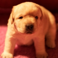 Bringing Your New Puppy Home   -   Gate 32