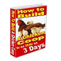 Build A Chicken Coop – An Investment In Food Independence