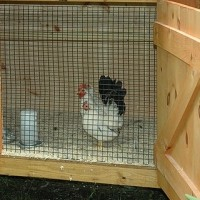 Build Chicken Coop - Know How