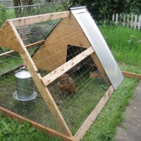 Build Chicken Coops - Advice