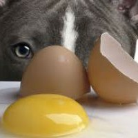 Can Dogs Eat Eggs?