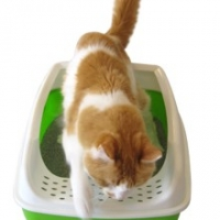 Cat Litter Basics