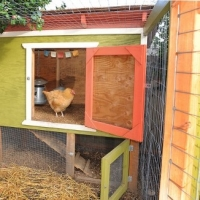 Chicken Coop Designs - Why You Need One