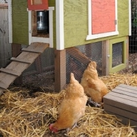 Chicken Coops Houses