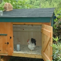 Chicken Plans - Designs for Chicken Coops