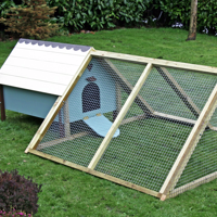Chicken Shed - Things You Should Know