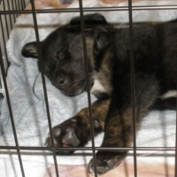 Choose the Right Dog Crate for Your Puppy