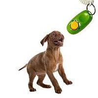 Clicker Train Your Puppy For Great Results