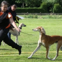 Clickertraining With Your Dog  -  Getting the Dog to Walk Nicely By Your Side