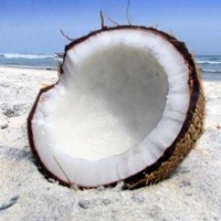 Coconut Oil For Weight Loss And How It Can Help You