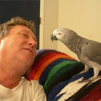 Companion Parrots - Gratification Of Living Together