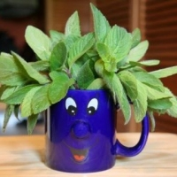 Container Gardening  -  The Benefits Of Being Mobile