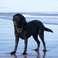 Dieting for Dogs    -    A Guide to Slimming Down the Family Pet