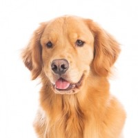 Discover The Best Dog Foods Ranked And Save Your Dog's Life