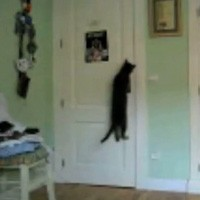 Does Anyone Have A Cat That Can Open A Door? Well My Cat Skiibowski Can