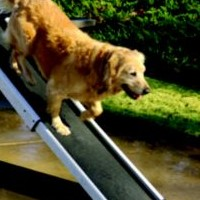 Does Your Dog Need the Ramp