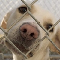Dog Adoption Will Save A Life And Bring You Joy!