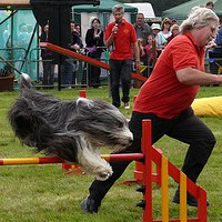 Dog Agility Competitions Entertainment Or Serious Competition?