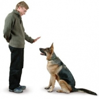 Dog And Man – Why Do Dogs Love Us?