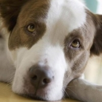 Dog Arthritis: Causes And Remedies